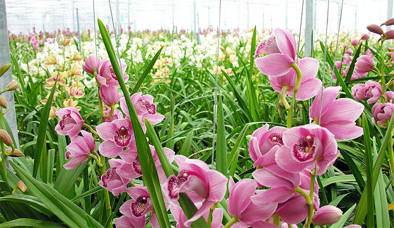 nieuw soort orchidee